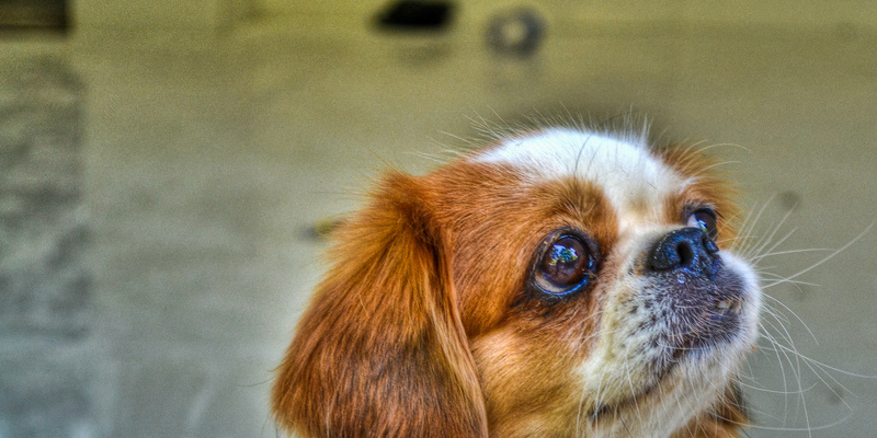 Houzz Pet of the Week: Thurza Honeybunny