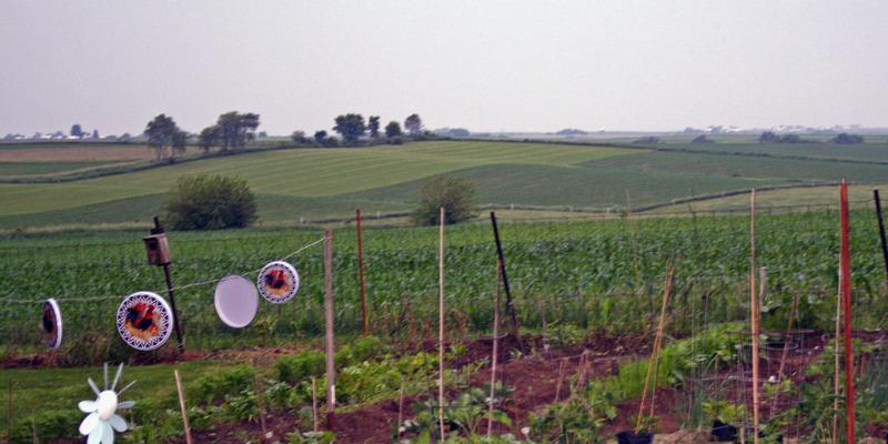 The best way to Grow Anne Raspberries