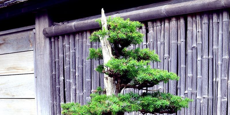 Perennials Vs. Annuals