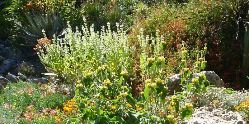 Schefflera Pueckleri vs. Schefflera Actinophylla