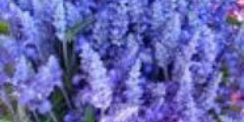 UV Bulbs for Plants